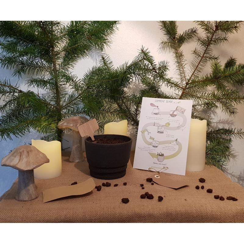 Kit pot avec graines de plantes aromatiques
