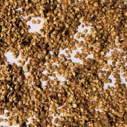 Graines de Betula costata - Semences du Puy