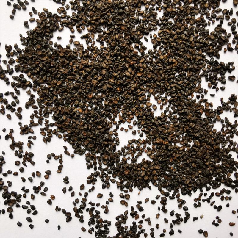 Graines d'Eucalyptus parvifolia - Semences du Puy