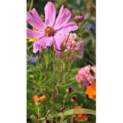 Graines sauvages de plantes & Fleurs sauvages blanches
