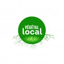 Marque-Végétal-local